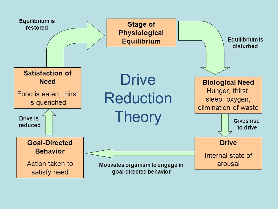 Drive Reduction Theory Stage of Physiological Equilibrium Biological Need Hunger, thirst, sleep, oxygen, elimination of waste Drive Internal state of arousal Goal-Directed Behavior Action taken to satisfy need Equilibrium is disturbed Equilibrium is restored Satisfaction of Need Food is eaten, thirst is quenched Drive is reduced Motivates organism to engage in goal-directed behavior Gives rise to drive
